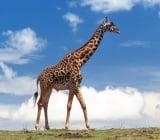 Кой колко е висок?