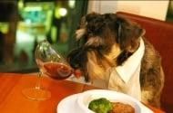 Кои хранителни продукти са опасни за здравето на котките и кучетата?