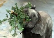 Колко храна може да изяде слона за един ден?