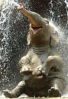 Колко вода събира хобота на слона?