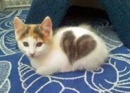 Котенца, които ни показват, че любовта е навсякъде около нас