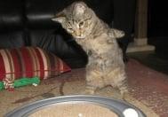 Котенце с отрязани лапички продължава да се радва на живота