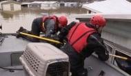 Котка се спаси по чудо от опустошителните наводнения в Мисури чрез своя пясъчник