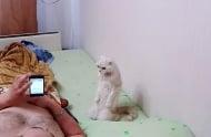 Котка патриот стои изправена, докато слуша химна (видео)