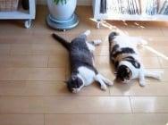Две котешки сродни души