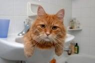 Котките обожават да са сами, но пък ни преследват дори в банята - защо?