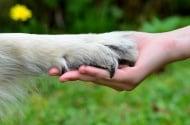 Куче от Пловдив помага на деца болни от рак