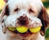 Тенис топките в очите на кучетата