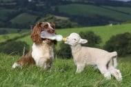 Кучета се грижат за животни от различни видове