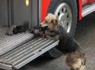 Куче влиза в пламъците на горяща къща, за да спаси малките си