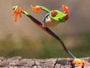 Кунг Фу по жабешки - уникалните пози на зелени жабки
