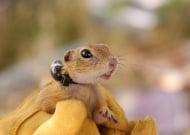 За първи път в България се следят изчезващи дребни бозайници с радиопредаватели