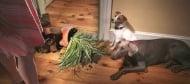 7 лоши навика на кучето