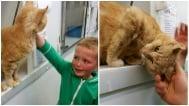 Малко момченце не можа да повярва, че е намерило изгубената си котка