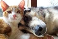Мир и любов между кучета и котки - мисията е възможна (снимки + видео)