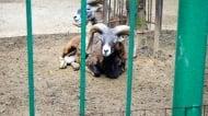 Мистериозно загинаха още две животни, вече и в старозагорския зоопарк