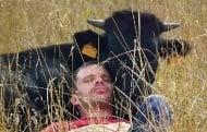 Мъж осиновява бик от корида, за да покаже на света, че са приятелски настроени