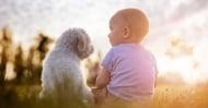 Условно приравняване възрастта на кучетата към човешката възраст
