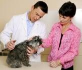 7-те най - чести извинения, които собствениците на домашни любимци използват пред ветеринарите