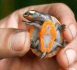 Най - причудливите костенурки в света