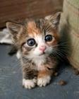 Една история за насилието над малки котенца от деца. Защо го правят?