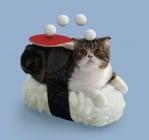 Котка вместо риба върху ориз за суши - древна японска мъдрост за състраданието