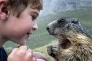 Необяснимо приятелство между малко момче и диви мармоти