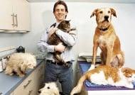 7 неща, които побъркват ветеринарите