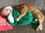 Невероятни котки, от които става перфектната бавачка
