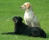 Незаразни болести - Кучета