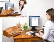 Ново поколение удобства за котката ни, за които не бихме се сетили сами