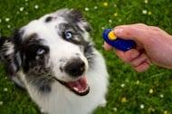 Обучение на кучето: Урок №1. Обучение с кликер