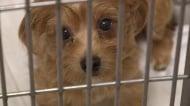Опитаха се да изнесат незаконно десетки животни от България