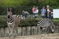 Излязоха резултатите от пробите в столичния зоопарк