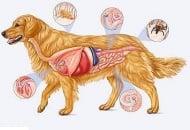 Паразитни болести - Кучета