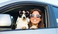 Полезни съвети към стопаните при пътуване с домашен любимец - куче
