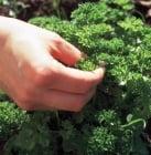 Фактори, променящи активността и определящи токсичността на билките