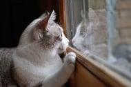 Помощ! Котката ми проявява проблемно поведение, виждайки животните навън!