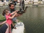 Пускат на свобода спасени лебеди и зеленоглави патици в езерото на Стара Загора