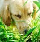 Растения, подобряващи апетита и храносмилането при животните