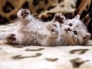 Как да обучите навреме малкото котенце?