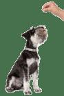 Обучение на кучето: Урок №11. Научете кучето на командата