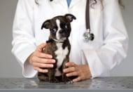 Снемане на анамнеза при кучето