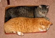 Снимки, доказващи огромната любов на котките към тесни пространства