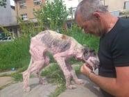 Снимки на българско улично куче в чужд сайт предизвикаха бум в интернет