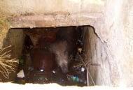 Спасиха глиганче от водна шахта в Стара Загора