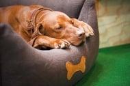 Сънуват ли кучетата?