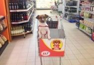 Супермаркет въведе колички с място за домашните любимци на клиентите