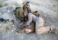 Трогателни снимки на кучета по време на война - това е истинска преданост!