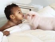 Трогателното приятелство между осиновено момиченце и неговото миниатюрно прасенце